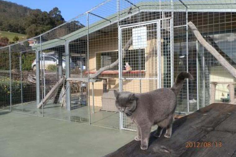 a tender loving cattery hobart